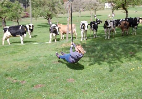 Kühe als interessierte Zuschauer