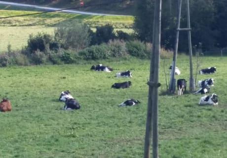 Da fühlen sich unsere Kühe wohl