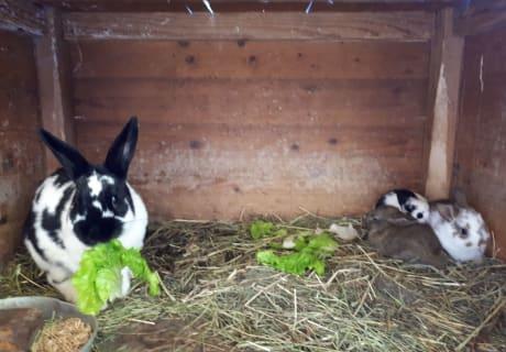 Daisy mit ihren Hasenbabys