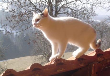 Katze auf der Lauer