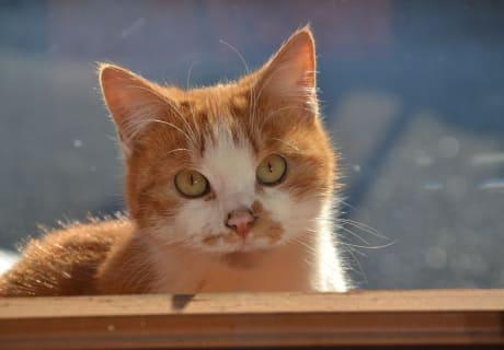 verschmuste Katze am Hof