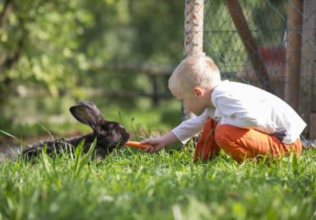 Niklas beim Hasenfüttern