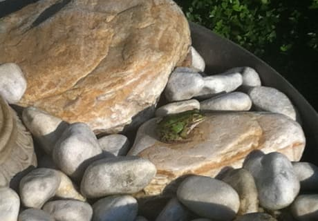 Ein Frosch geht auf Wanderschaft