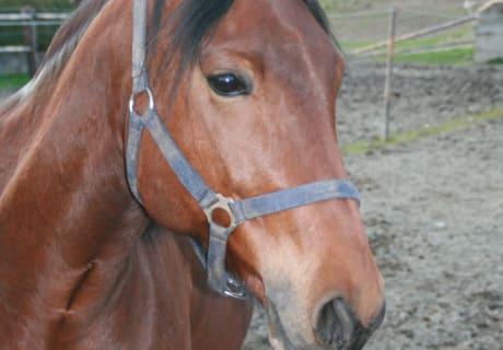 Pferd Sami