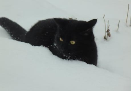 Oje, der erste Schnee.