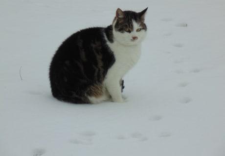 Auch unserere Nala ist Schnee nicht ganz geheuer.