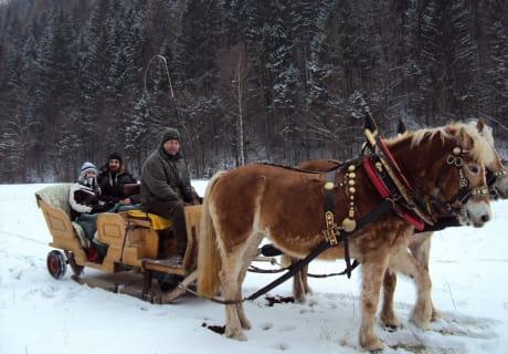 Schlittenfahrt im Winter