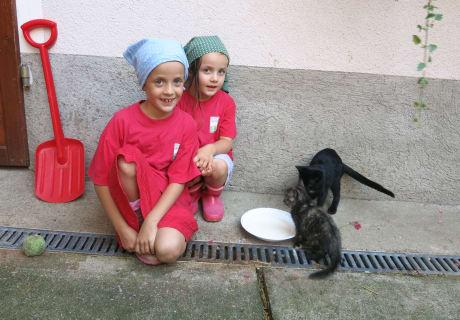 Milch für die Katzen.