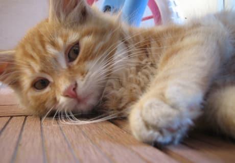 Katzenkind Balu