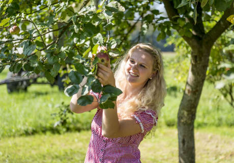 Fruchtsäfte aus alten Obstsorten