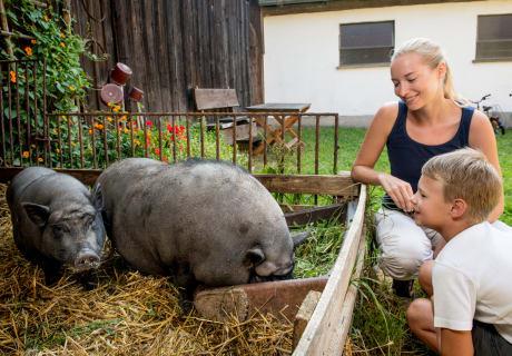 Prannleithen - Streichelschweine im Hof