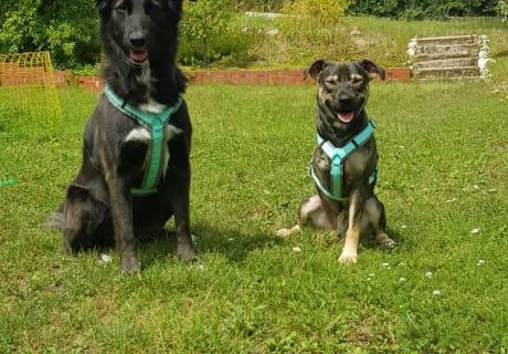 Sina und Cody- unsere Hunde (im oberen Gartenbereich)