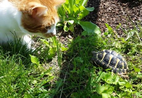 Timmi bei den Schildkröten