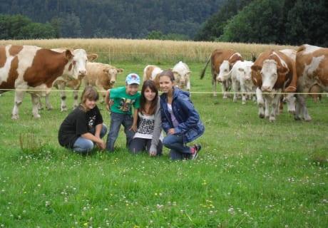 Gruppenfoto mit Kühen