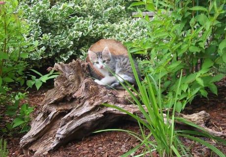 Kätzchen im Sträucherparadies