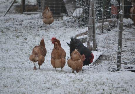Hühnerfarm - Gästezimmer Gerlinde
