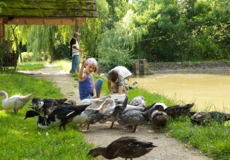 Die Hochrieß - Enten