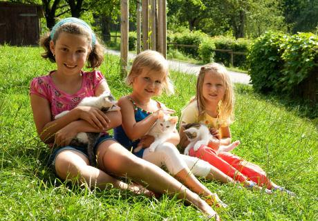 Die Hochrieß - Katzen