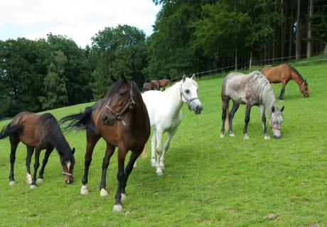 Die Hochrieß - Pferde