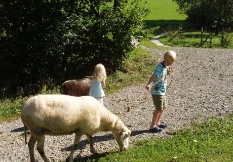 Schafe austreiben