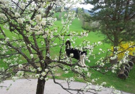 Hirmhof - Shakira am Obstbaum