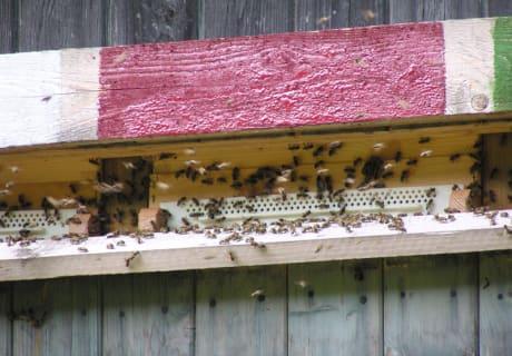 unsere fleißigen Bienen