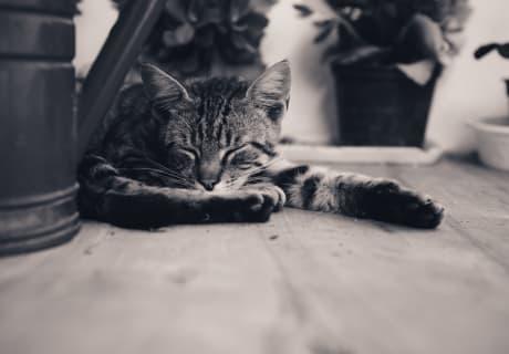 sehr zufrieden diese Katze