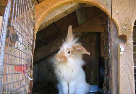 Kaninchen wohnen anders