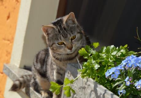 """""""Mogli"""" mit den Frühlingsblühern"""