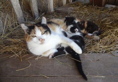 Unsere Katzenmama mit ihren zwei jungen Kätzchen