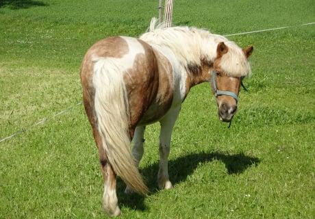 """Pony """"Flipper"""""""