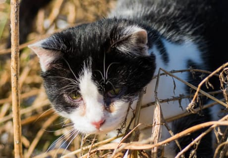 "Katze ""Fredi"""