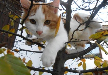 Aristo am Baum