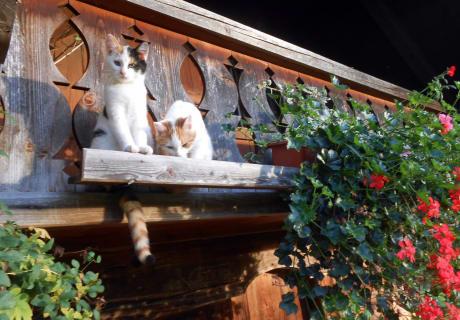Am Balkon der Hütte