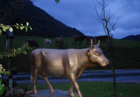 unsere goldene Kuh