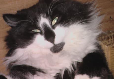 Unsere Katze Bärli