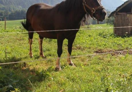 """unser Pony """"Heidi"""""""