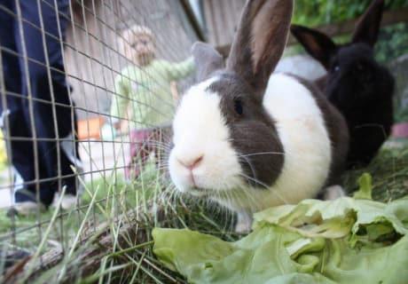 Mhh, frischer Salat vom Garten