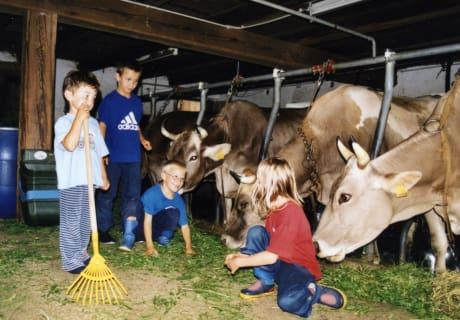 Mithelfen beim Kühe melken und Kälber füttern.