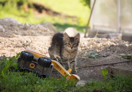 Unsere Katze beim spielen
