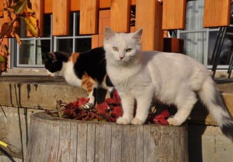 Katzen im Herbst