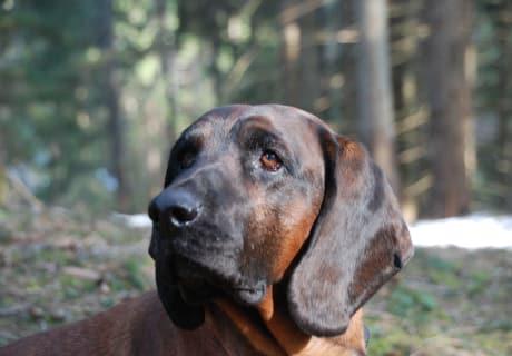 Gringo unser Hund