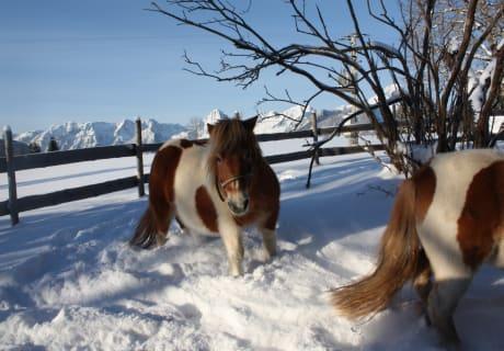 Pulverschnee! Da haben auch unsere Ponys Spaß!