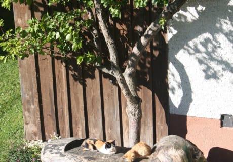 Unsere Katzten genießen die Frühsommersonne!