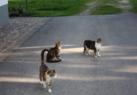 Unsere Schmusekatzen!