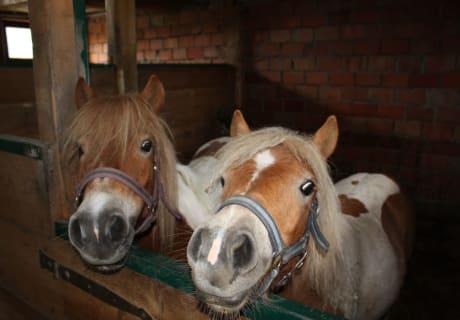 Unsere zwei Ponys warten schon auf dich!