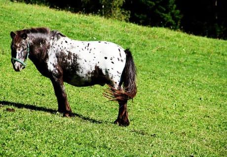 Pony Ranti