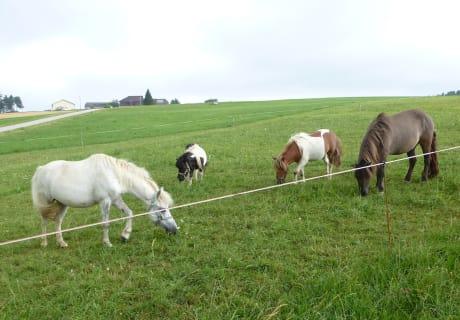 Merlin, Theo, Max und Ilka