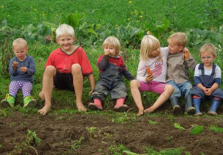 Kinder am Krautacker