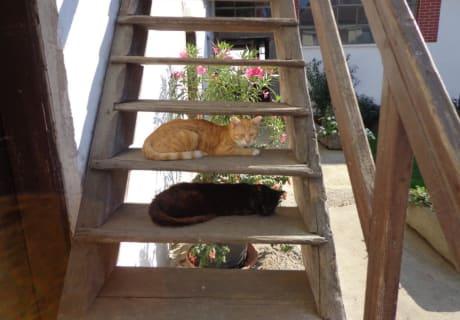Mittagsruhe der Katzen